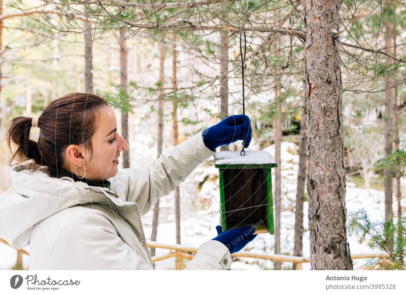 Woman placing a wooden bird's nest in the forest. Snowy landscape birds woman snow bio conservation planet birdhouse home habitat hand-made wild protection care
