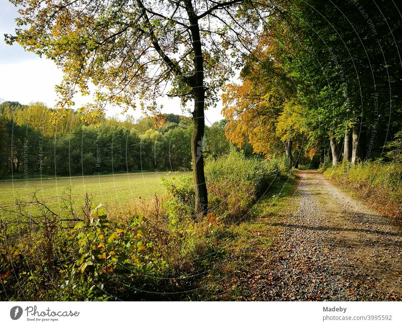 Field path along a forest clearing with green meadows in autumn in Oerlinghausen near Bielefeld in the Teutoburg Forest in East Westphalia-Lippe Meadow