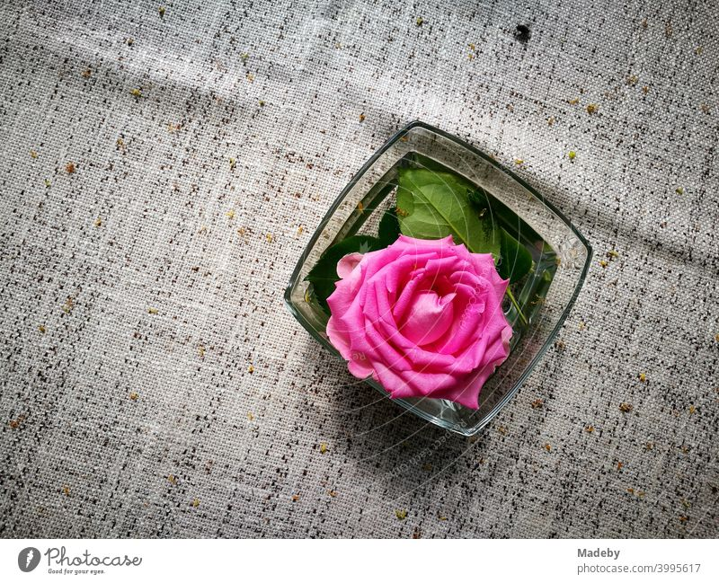 Decorative purple rose blossom in a glass bowl from table decoration on natural-coloured tablecloth in the beer garden at the Bartholdskrug in Oerlinghausen near Bielefeld in the Teutoburg Forest in East Westphalia-Lippe
