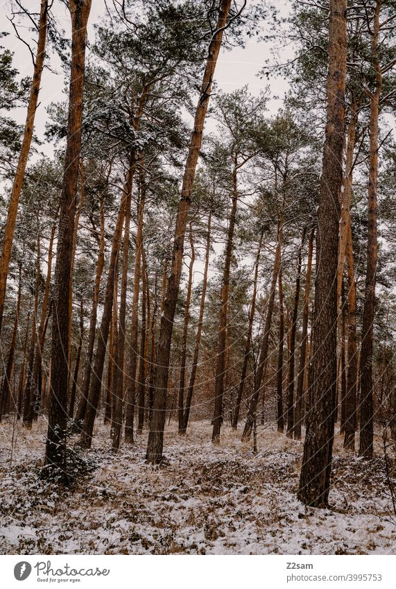 winter landscape Winter walk Landscape Nature trees chill Frost Lonely tranquillity relaxation Moody Winter mood Winter's day Forest Winter forest Forestry