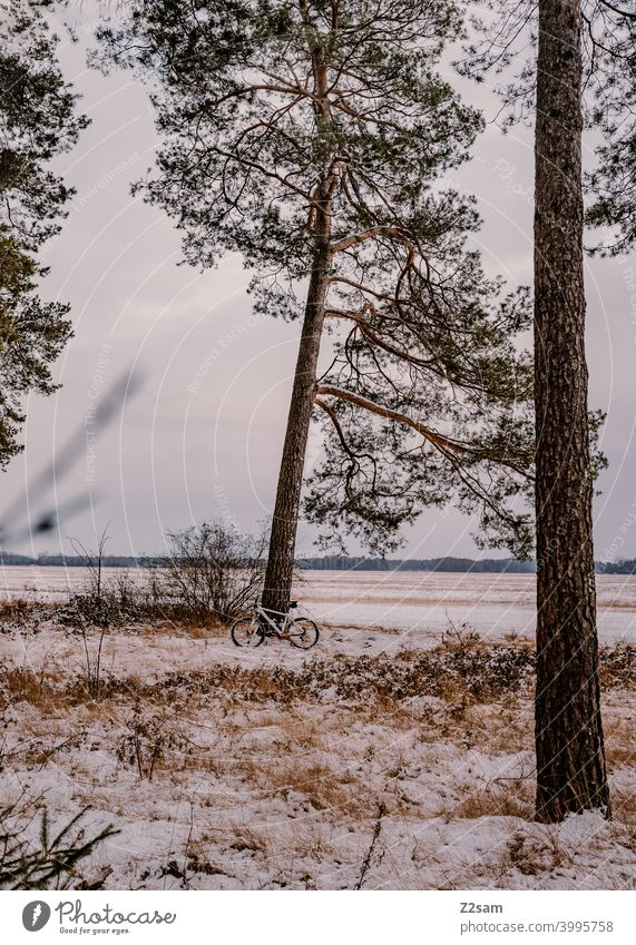 Mountain bike standing against a tree in winter landscape Cycling tour Winter Snow trees Forest Sky Bicycle Sports Trip chill Landscape Nature Bushes lean Break