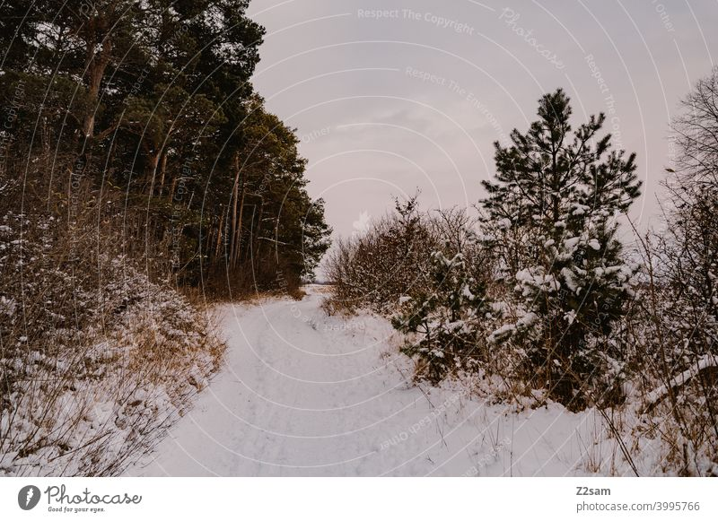winter landscape Winter walk Landscape Nature trees chill Frost Lonely tranquillity relaxation Moody Winter mood Winter's day Forest Winter forest shrubby