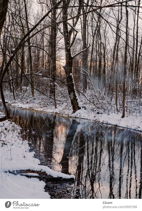 winter landscape Winter walk Landscape Nature Brook River Water reflection Sunset trees Reflection chill Frost Lonely tranquillity relaxation Moody Winter mood