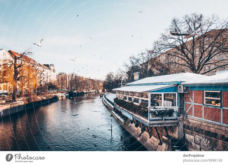 Landwehrkanal with seagulls in winter in Kreuzberg Wall (barrier) Wall (building) Hip & trendy Light Day Copy Space middle Exterior shot Experimental