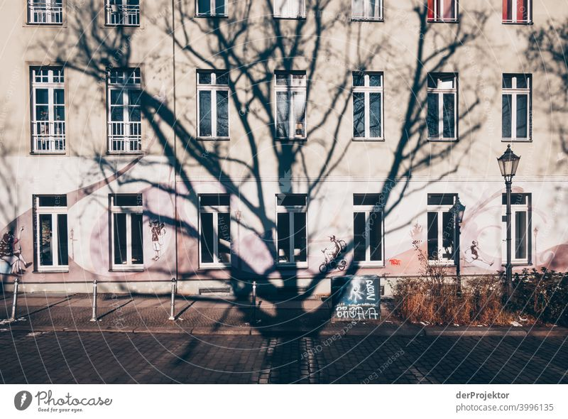 Tree shade in winter in Kreuzberg Wall (barrier) Wall (building) Hip & trendy Light Day Copy Space middle Exterior shot Experimental Copy Space top Berlin