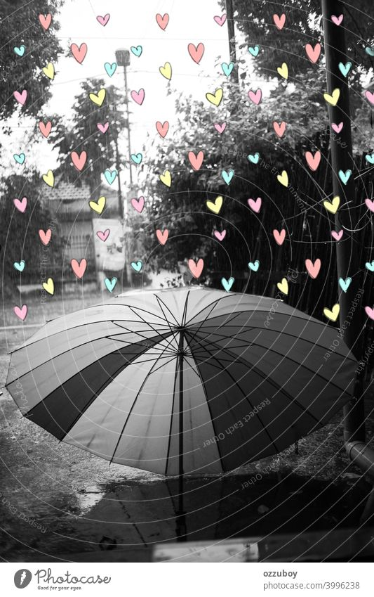 black and white umbrella at rainy season with colour full love weather wet day outdoor water drop background nature protection raindrop fall storm outside