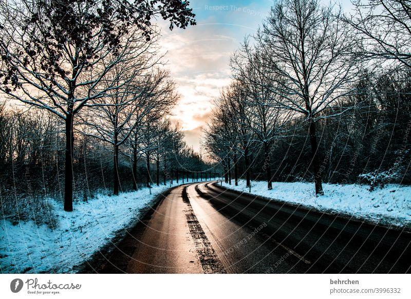winter lustre splendour Street Lanes & trails Sunrise Clouds Climate Snow Snowfall Calm Sky Winter Environment Nature Landscape Frost trees winter landscape