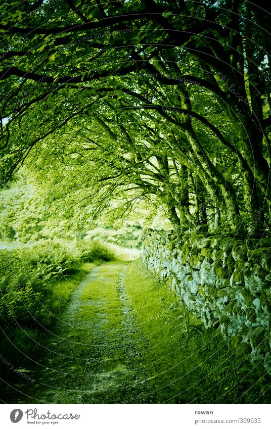 green Environment Nature Landscape Tree Grass Moss Garden Park Forest Creepy Green Wall (barrier) Rest of a wall Stone wall Ireland Tunnel Mystic Leaf