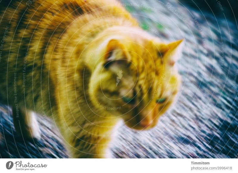 Shut up, I'm doing it! Cat motion blur Lanes & trails Pelt eyes Dynamics Animal Colour photo Deserted