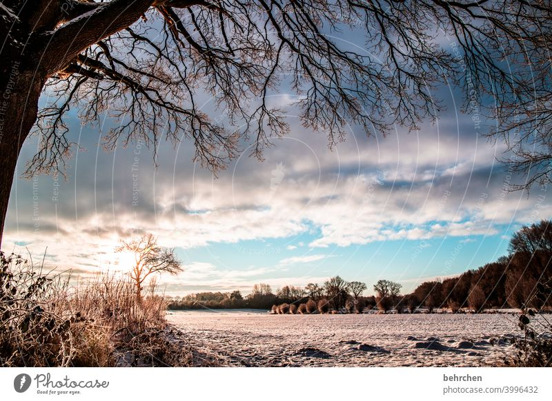 there is sunshine in winter too! Sunbeam Sunlight Snowfall White Calm Environment Meadow Field Forest Frost Landscape Winter Sky Nature Freeze Seasons Fabulous