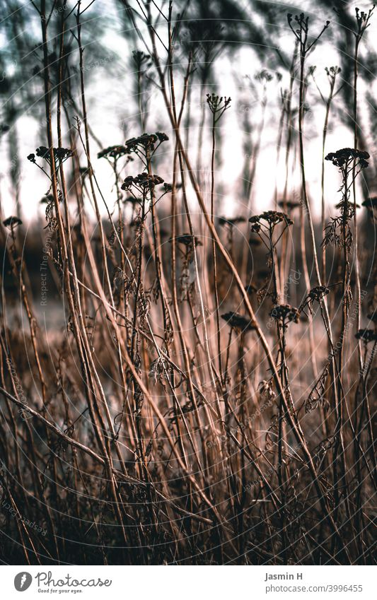 Wilt at the edge of the field Nature Exterior shot Environment Plant Colour photo Deserted naturally withered Transience out Margin of a field