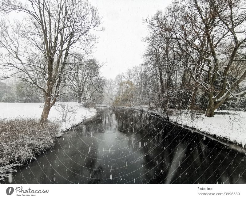 Winter landscape in snowfall winter landscape Landscape Winter mood Winter's day Snow Cold Nature Snowscape White Tree trees Forest Winter forest Exterior shot