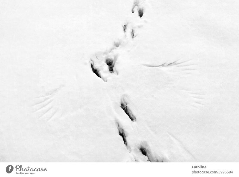 Tracks in the snow I. Well? What do they say? Snow Winter Cold White Frost Exterior shot Deserted Nature Day Snow track Footprint Contrast Weather Environment
