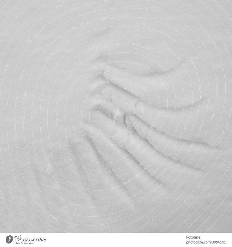 Tracks in the snow II - Wing tracks Snow Winter Cold White Frost Exterior shot Deserted Nature Day Snow track Footprint Contrast Weather Environment Snow layer