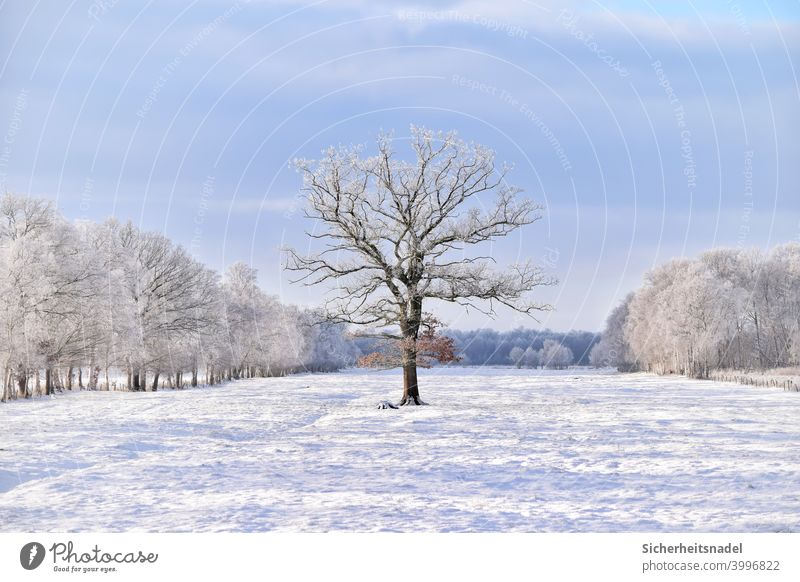 Tree on meadow Nature Field Landscape Meadow Deserted Day Exterior shot Beautiful weather Winter White Snow snow-covered Snowscape Winter mood Willow tree Cold