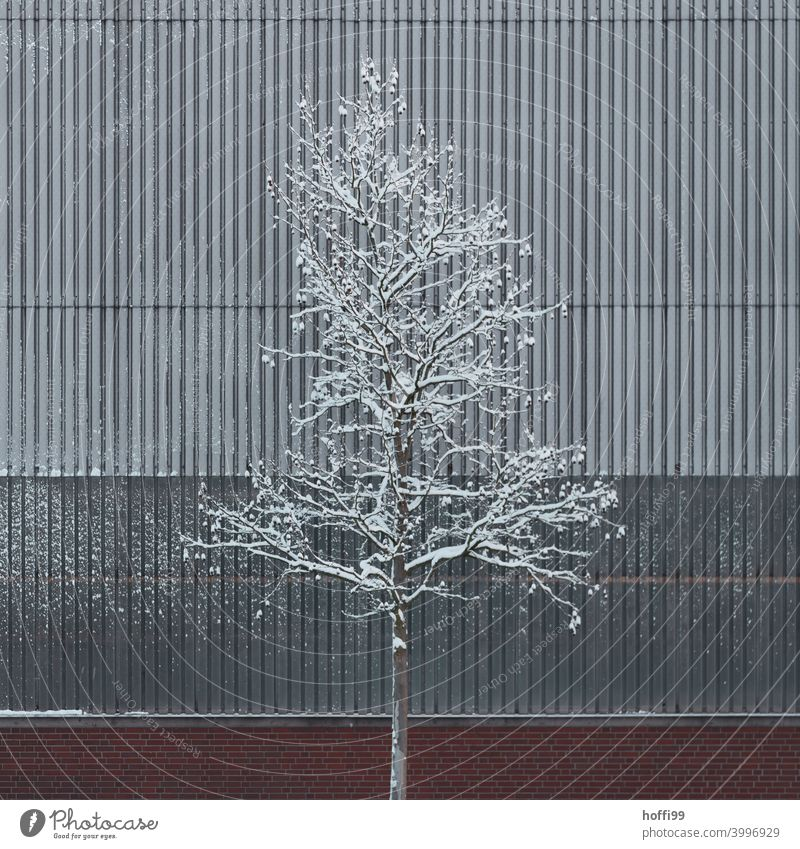 Snow covered tree in front of a dreary industrial facade Tree Warehouse snow-covered snowcapped tree snowcapped branch ice and snow Winter mood minimalism Cold