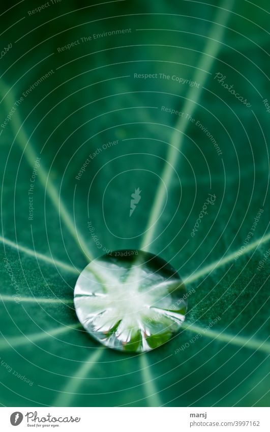 Fresh kick for the new week. Pure water drop on green leaf Fluid strength Wet Small Glittering Illuminate Elegant invigorating Esthetic Surface tension Round