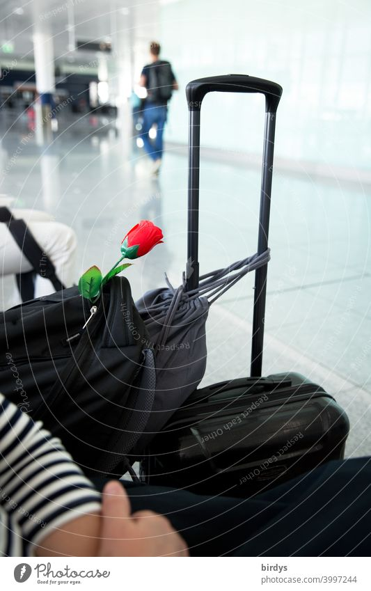 Long distance relationship . Traveler with red rose in luggage in almost empty waiting area of an airport.weak depth of field travel long-distance relationship