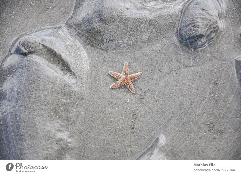 Red starfish in the sand Starfish Deserted Multicoloured Exterior shot Summer Vacation & Travel Sandy beach Maritime Vacation photo Abstract Copy Space bottom