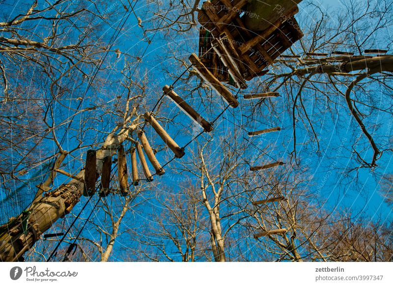 High Ropes Course Branch Tree Relaxation holidays Worm's-eye view Sky virgin heathland Climbing Garden climbing Deserted Nature Plant tranquillity Sports trunk