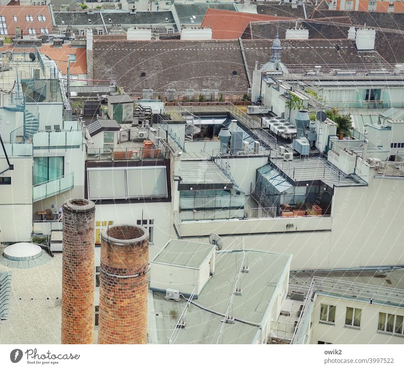 On top of that Vienna City sea of houses Capital city Window Exterior shot Panorama (View) Austria outlook Colour photo Town House (Residential Structure)