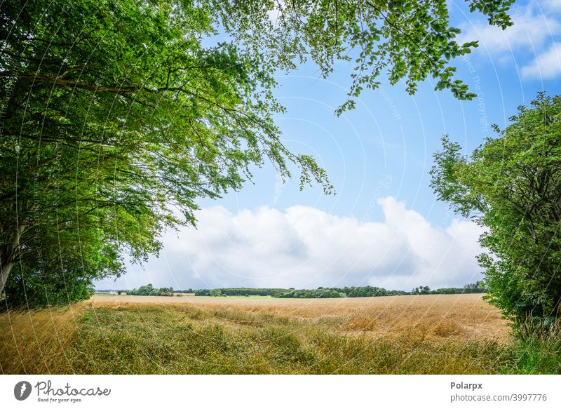 Rural landscape with fresh straw fields tranquil denmark foliage scandinavia weather colorful scenery ecology agriculture harvest hay grassland cloudscape