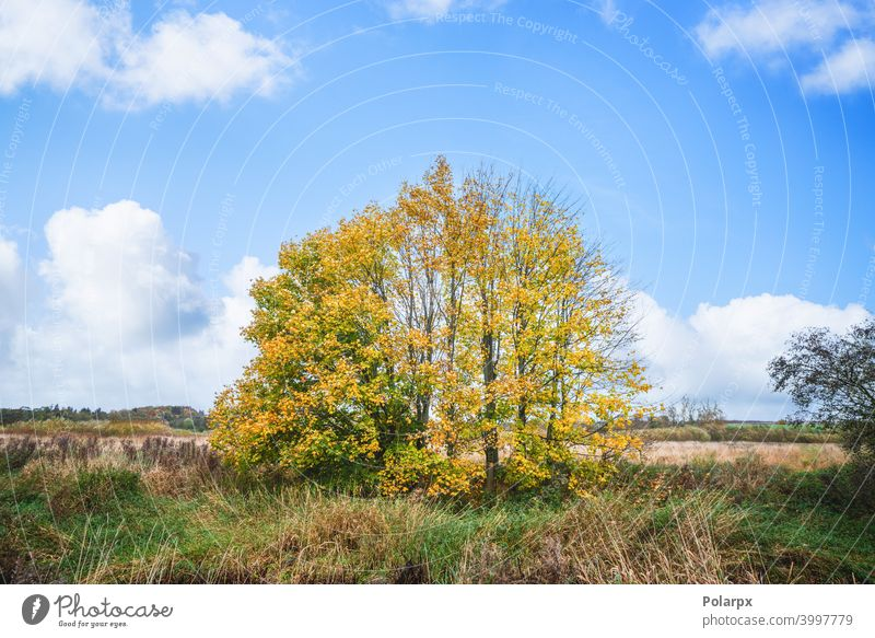 Colorful autumn scenery with trees straw vibrant pasture country garden countryside meadow nobody maple leaf seasonal scenic october sunlight field outdoors