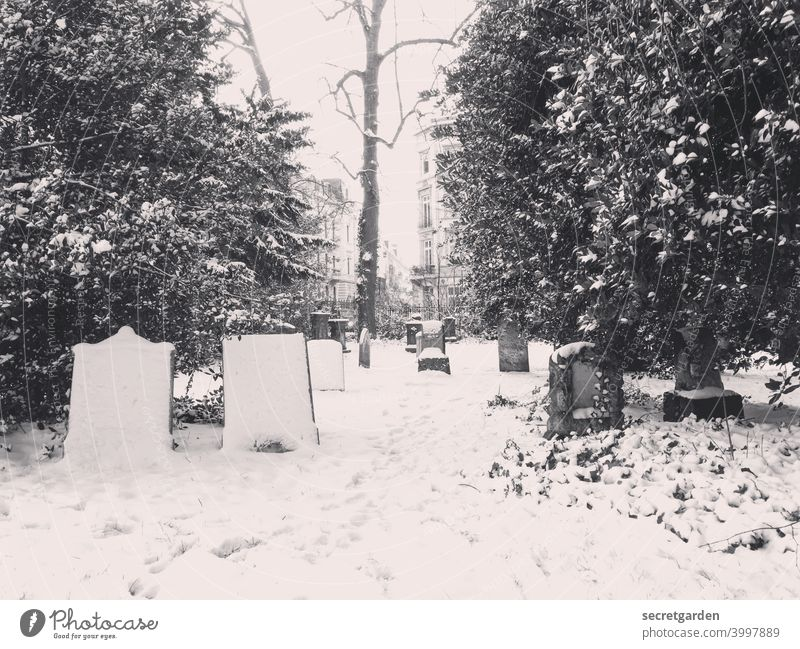 Peaceful graveyard of the freezing _________ Snow Snowfall Snowscape Snow track snow-covered Winter Cold Exterior shot Nature White Deserted Frost Tree