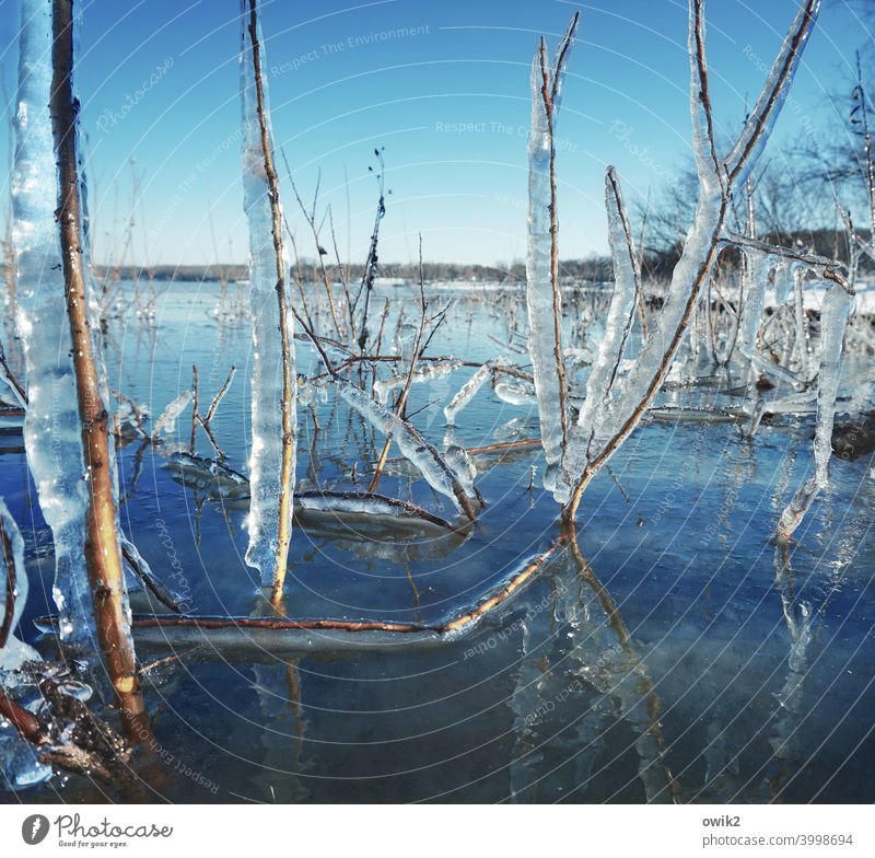 At the sea of glass Plant Wild plant Frost Ice Frozen Near Cold Twig Environment Winter Colour photo Ice crystal Structures and shapes Detail Exterior shot