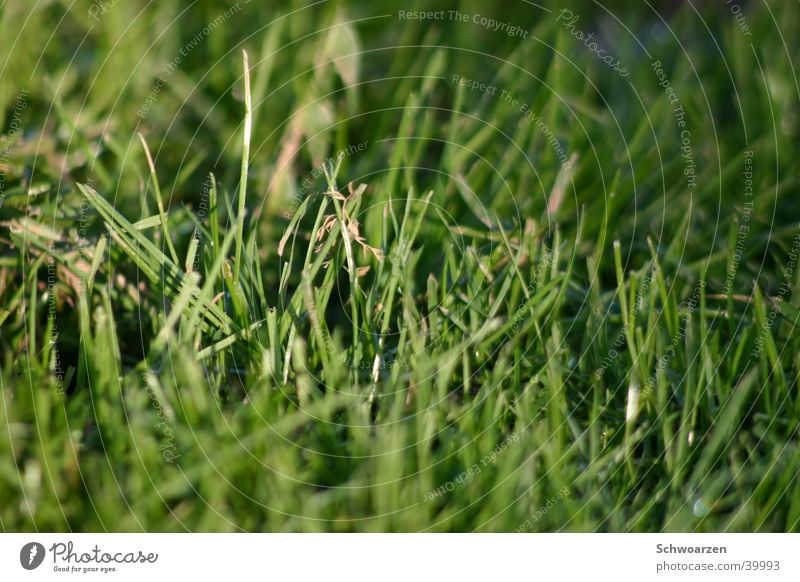 Green Summer Meadow Grass Fresh Lawn