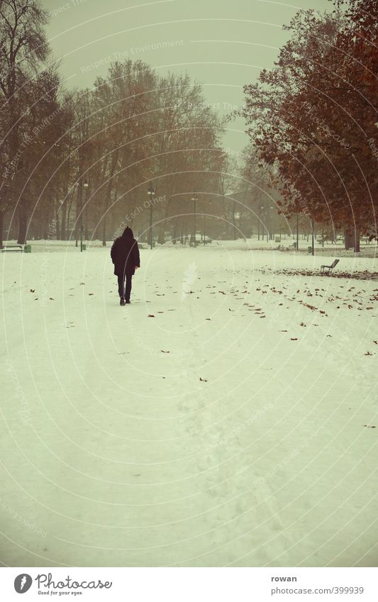 Human being Man Tree Loneliness Landscape Leaf Winter Adults Cold Snow Emotions Sadness Lanes & trails Think Going Garden