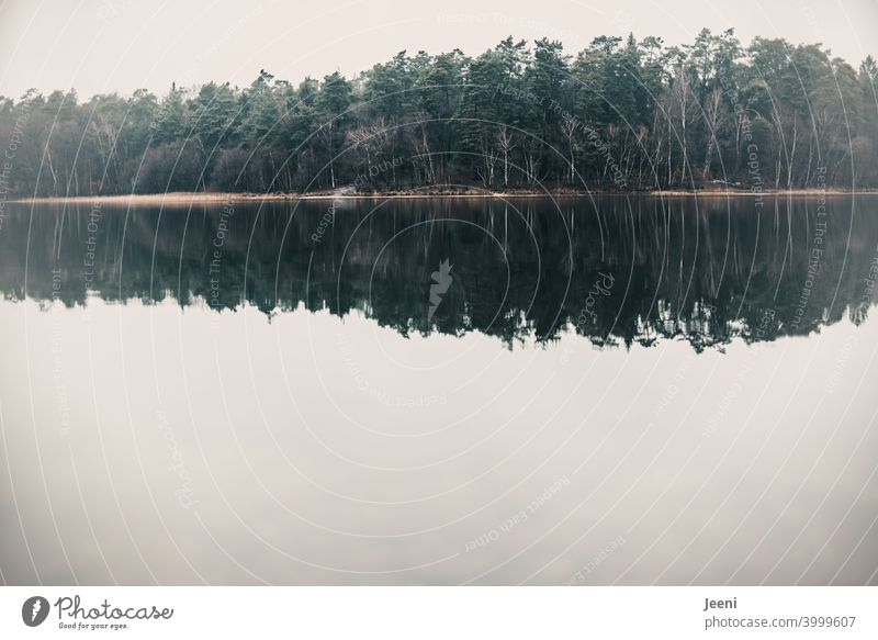 Forest in fog in double version | trees reflected in the water of the lake Lake Water Mirror Mirror image reflection Reflection in the water Surface of water