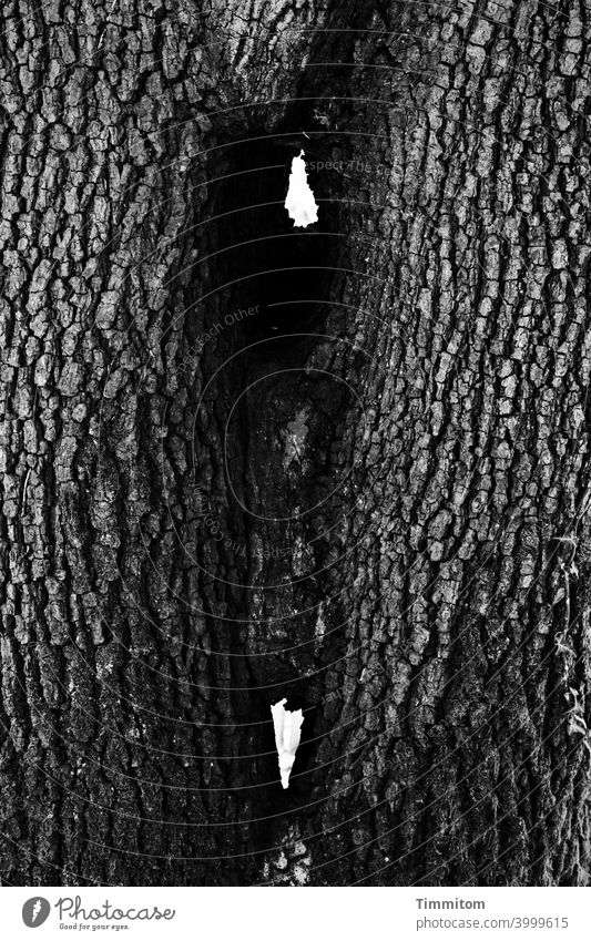 Two trees, very closely connected Tree Tree trunk bark Narrow interconnected Consolidate Nature Wood Black & white photo Vista
