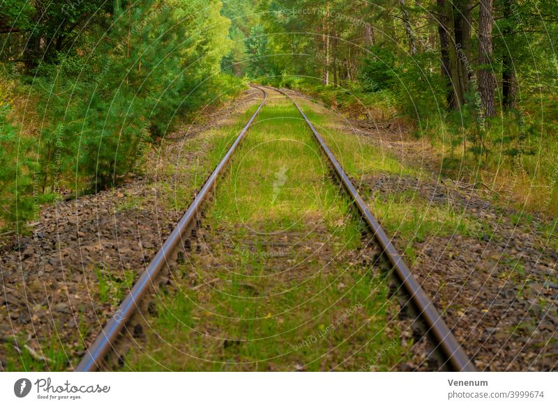 Old railway tracks that are no longer used in Germany,Trees next to the railway tracks,Wildgrass on the track bed Track rails railroad iron rust
