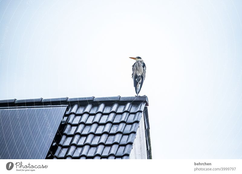 A little man stands... Grand piano wittily Beak Sky Above Environment Gray Colour photo Animal Exterior shot Nature Animal portrait pretty herons feathers Bird