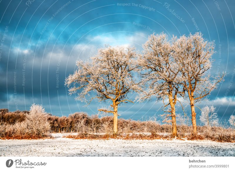 winter trees Colour photo Calm Environment Landscape Sky Freeze Frozen Hoar frost Seasons Frost Nature Meadow Field silent Weather Deserted Tree Idyll