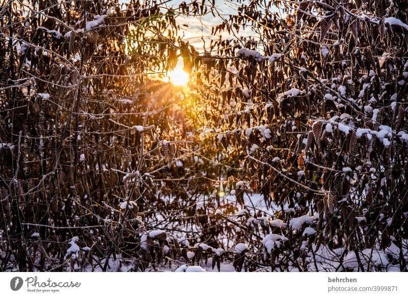 winter light Seasons Winter Autumn Forest Back-light Light Twigs and branches Garden Meadow Sunrise Sunlight Nature Branches and twigs Climate Gorgeous pretty