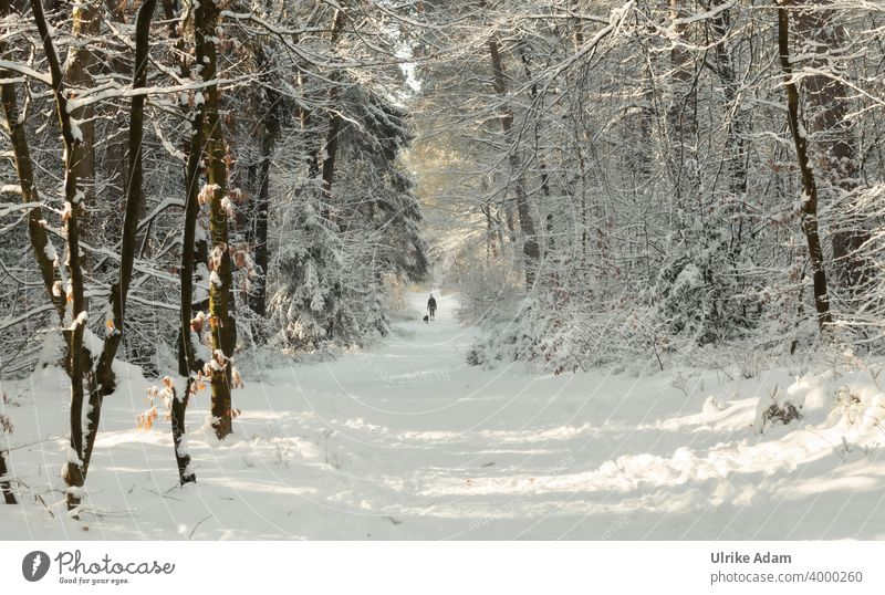 Walk with dog in winter fairy tale forest Osterholz-Scharmbeck Garlstedt Forest Snowscape Winter trees Frost Winter mood Winter wonderland White