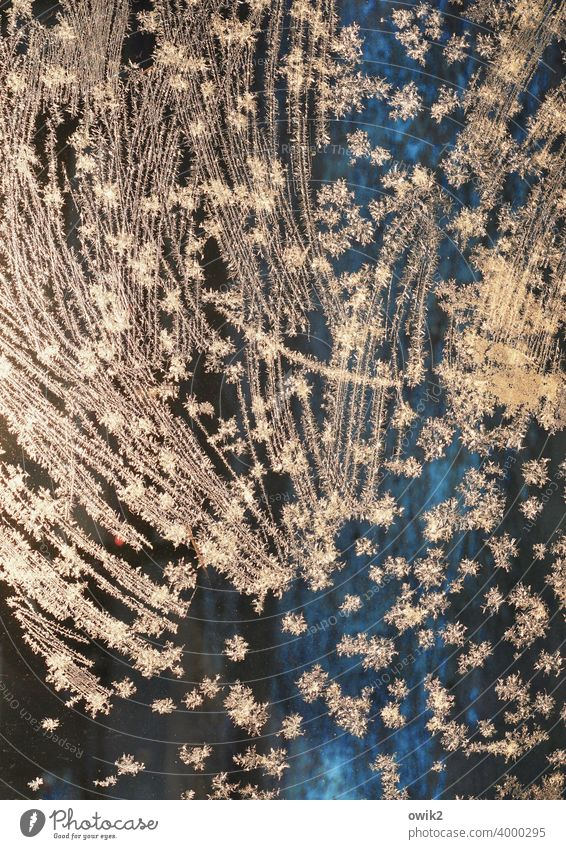 falling stars Ice Frostwork Glass Colour photo Cold Bizarre Deserted Winter Close-up Detail Exterior shot Ice crystal Illuminate Glittering Brilliant
