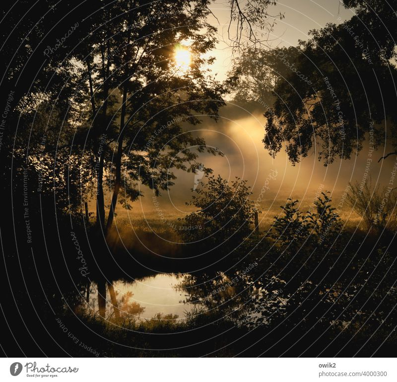 nebulous mystic landscape Water reflection Eternity Moody Forest Gigantic Infinity Sky Grass Detail Twilight Mysterious Meadow windless Autumn Sun Long shot