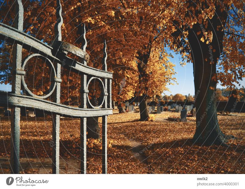 At the gate Cemetery Sadness graveyard Central perspective End Grave Death Goal wrought-iron Shadow Grating Eternity Deserted Colour photo Bushes Lanes & trails