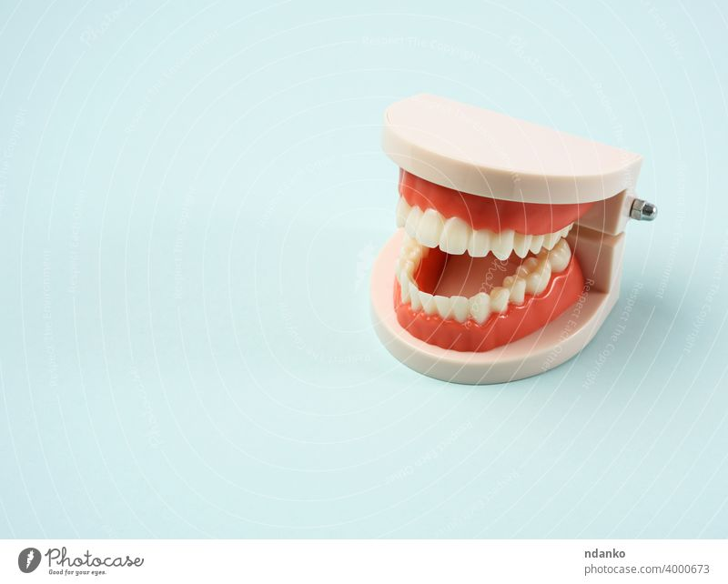 plastic model of the jaw with white teeth, blue background medical medicine mouth tool tooth treatment nobody oral orthodontic care clean clinic closeup dental
