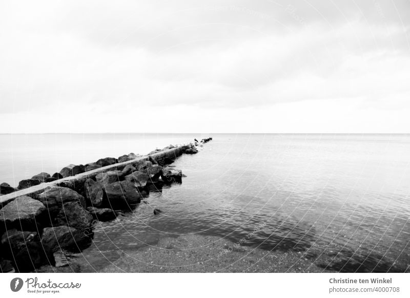 A groyne made of stones on the Baltic Sea coast projects far out into the water. It protects the coast from waves and currents. Several cormorants have gathered at the end of the groyne