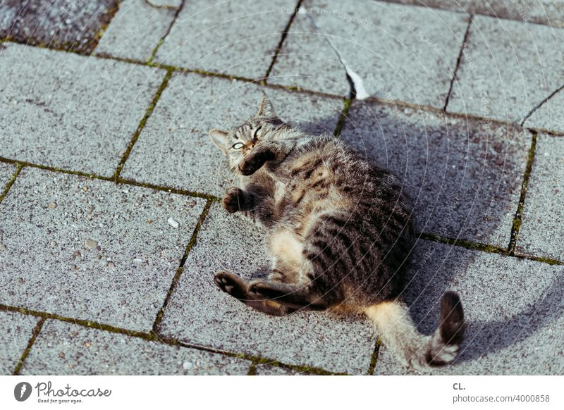 cat Cat Animal Pet Ground out Playing Roll Looking 1 Playful Funny Cute At the back roll