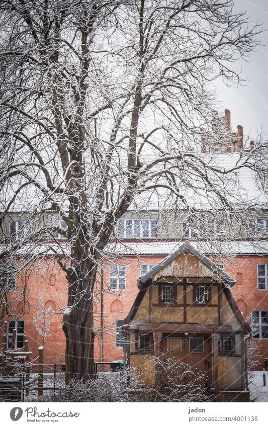 tree, house, snow. House (Residential Structure) Winter Snow Tree Cold Ice White Hoar frost Frozen Nature Branch Boathouse Frost Plant Deserted