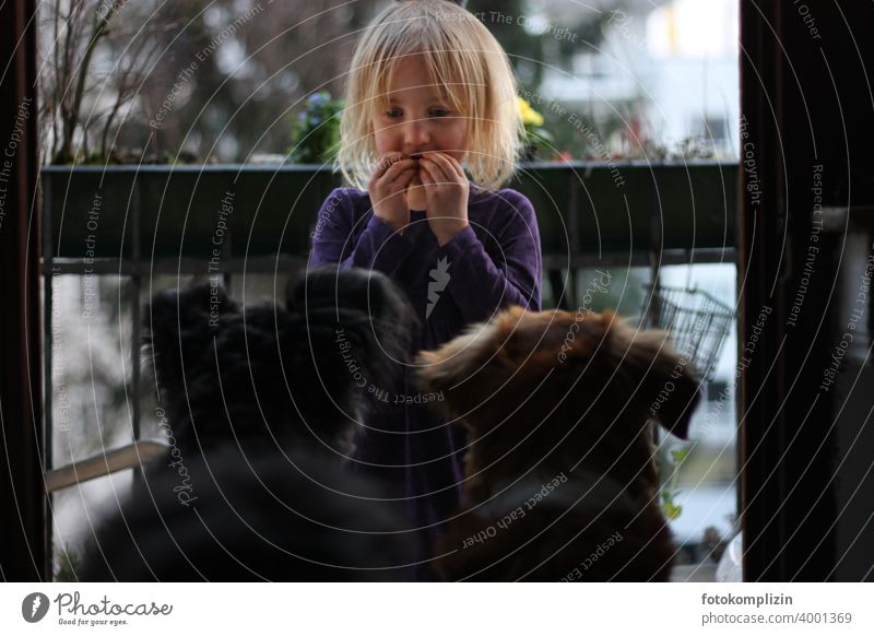 Child communicates with two dogs Dog Girl Watchdog Pet Love of animals dog love communication Friendship Humans and animals Cute in common Together