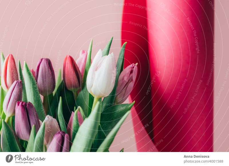 Colorful Classic Bunch of Tulips tulip day bunch flower bouquet mothers day purple pink nature spring green 8 march beautiful color blossom card summer red gift