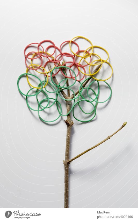 RUBBER TREE Branch branches Tree rubber rings Rubber tree symbol picture Interior shot