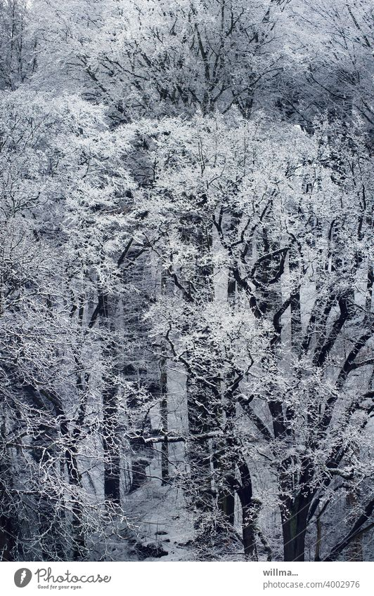 and it was winter... Winter trees Forest snowy Snow Bird's-eye view Winter mood Winter forest Winter's day