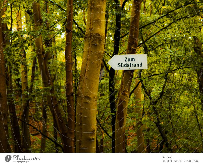 To the south beach - Small forest on Rügen, Baltic resort Sellin Road marking Arrow tribes trees Forest foliage branches Fastening Contrast Nature Exterior shot